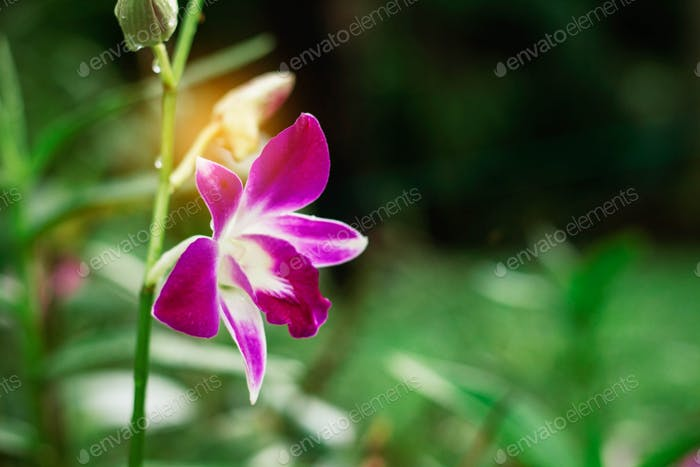 orchid with green nature