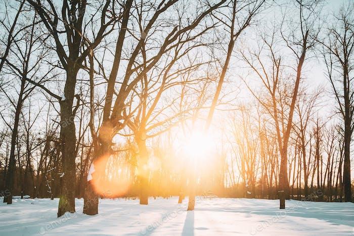 Beautiful Sunset Sunrise Sun Sunshine In Sunny Winter Snowy Fore