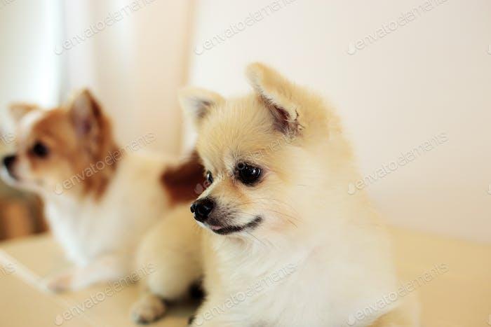 Hund an der Wand Hintergrund