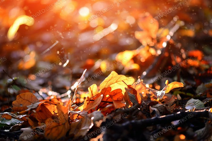 Colorful leaves in autumn forest sunny day