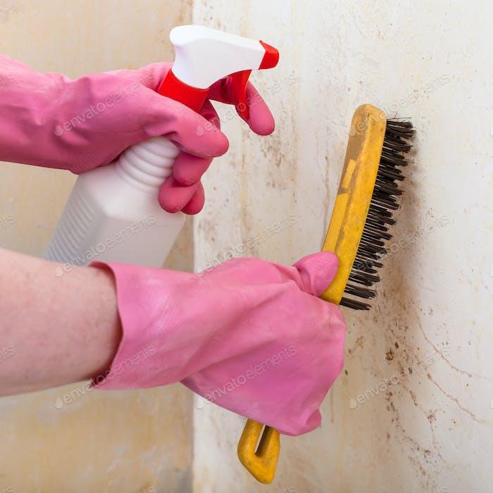 Entfernen von Schimmel von der Wand mit Spray und Pinsel