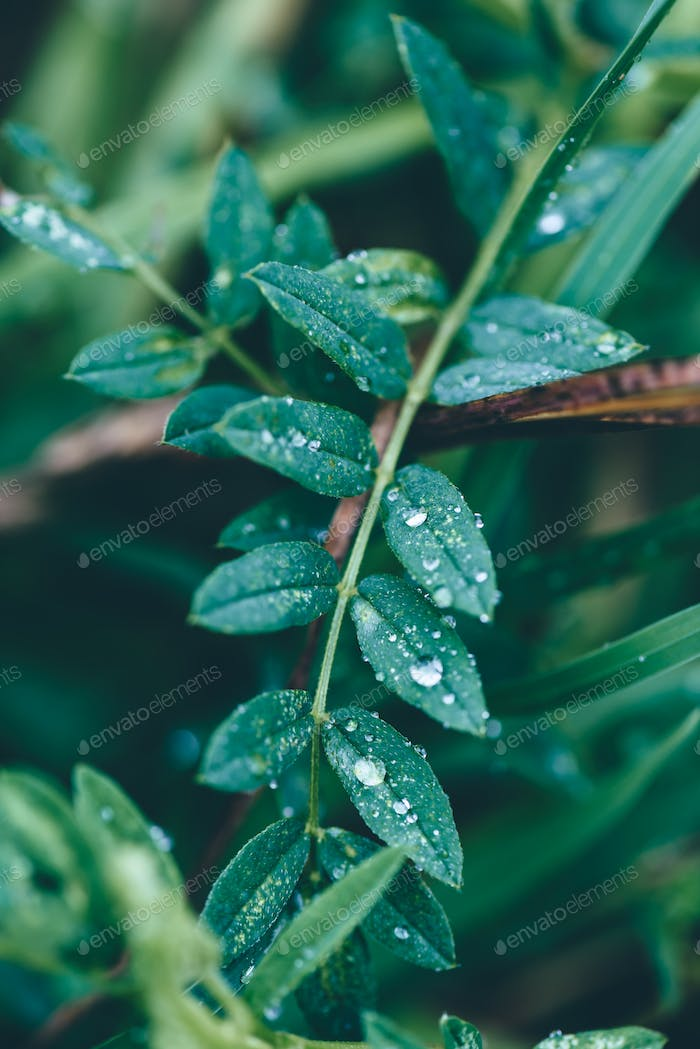Close up of rain drops on the leaves