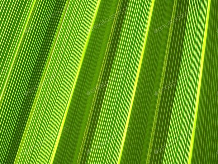Tropische Palmenblatt Nahaufnahme Textur