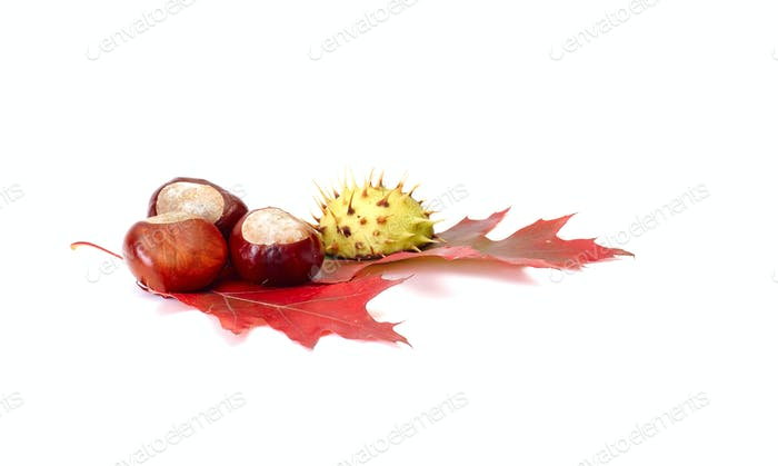 Colorful chestnuts and leaves on a white.