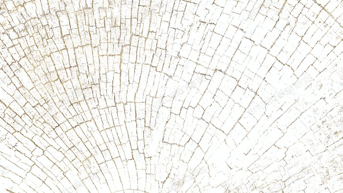 Bleached tree rings blog banner background