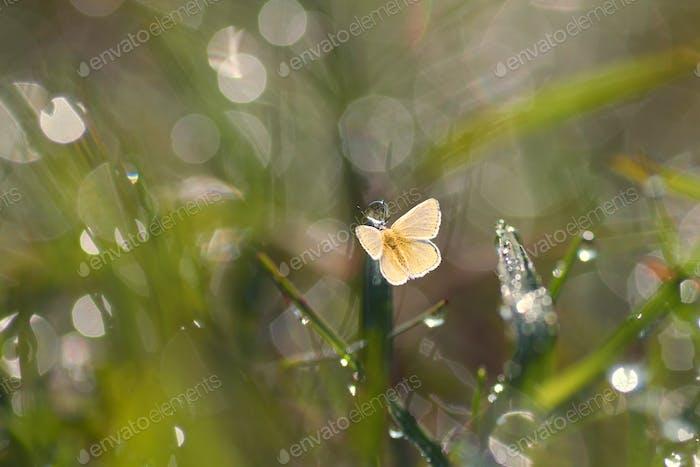 Yellow Butterflies Sitting on a Grass