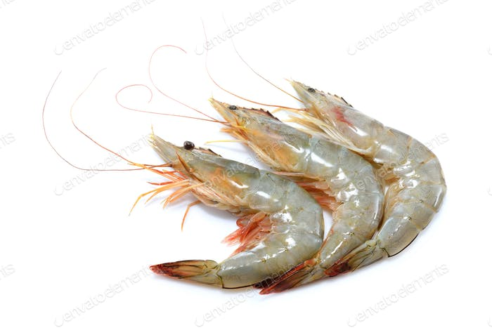Fresh shrimps,prawns isolated