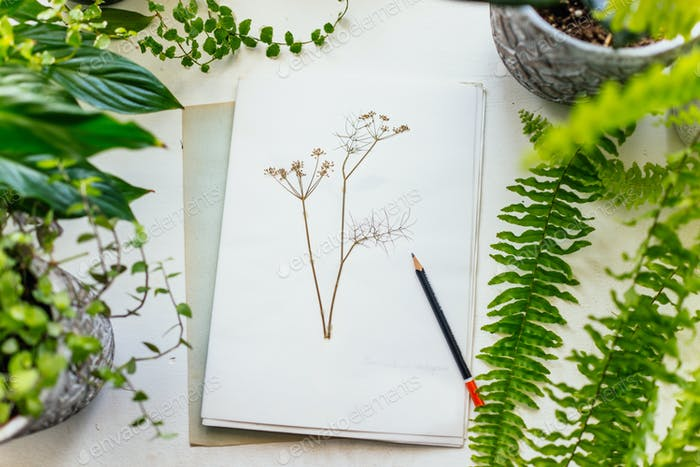 Herbarium and plants