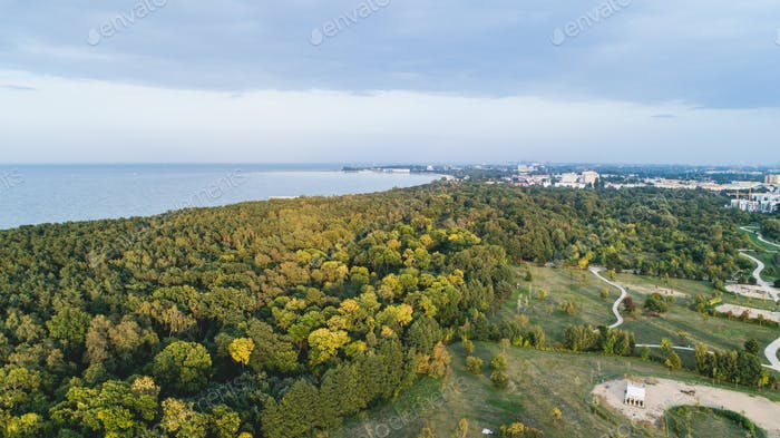 Forest seashore by the Baltic Sea in Gdansk