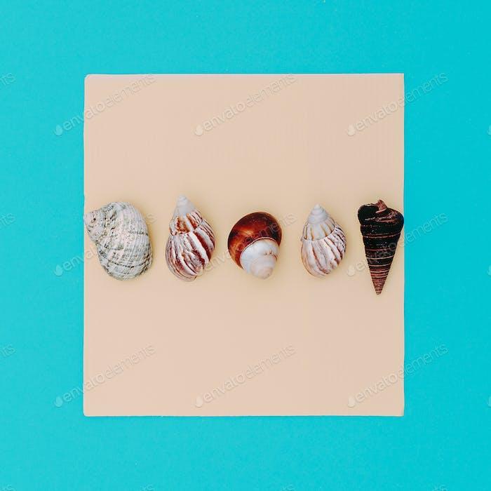 Set shells Beach sea style. Minimal