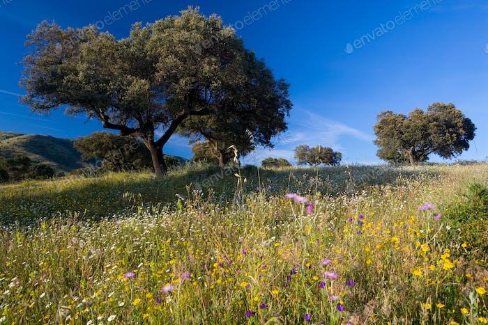 Landschaft mit Bäumen und Wildblumen in der Nähe von Guadalupe, Extremadura, Spanien.