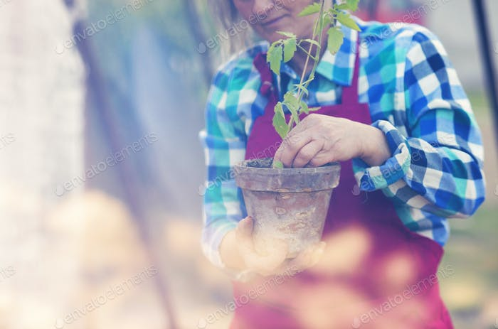 Senior woman planting seedlings