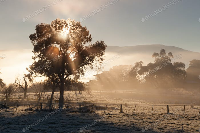 Sunrise In The Yarra Valley In Winter