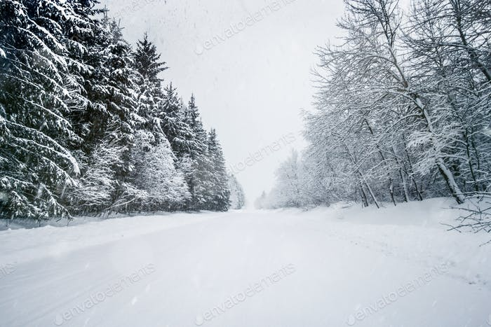 Road in Forest Covered with Snow on a Calm Snowy Day