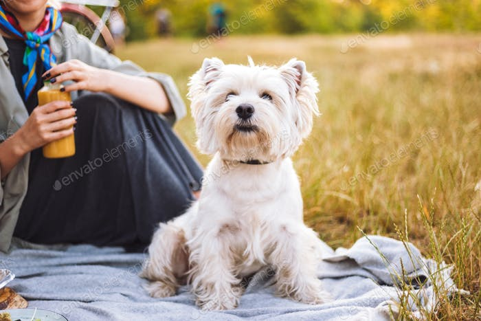 Close up beautiful little dog sitting on picnic blanket with own