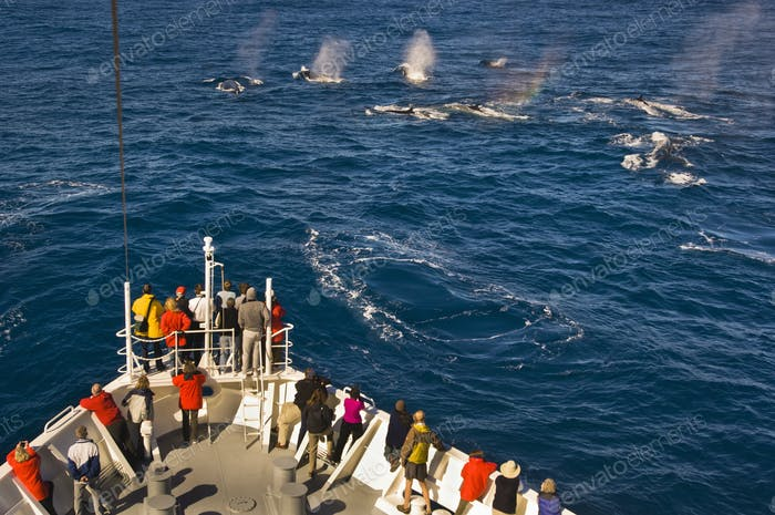 Tourists watching fin whales from a cruise ship, off the coast of South Georgia Island.