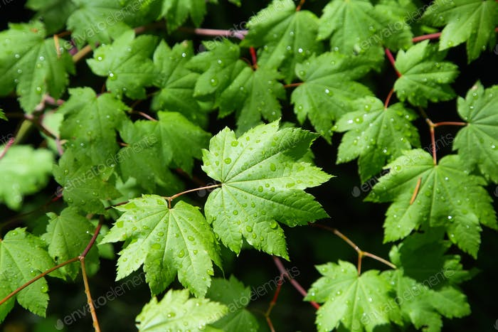 Humid green leaves