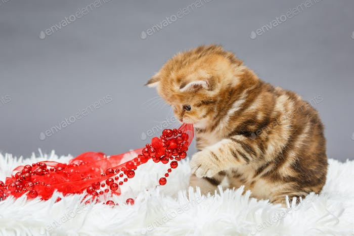 Лitten and Christmas decoration