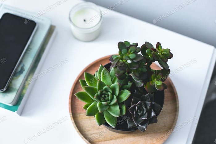 Tiny succulents on bedside table in the bedroom in scandinavian style home