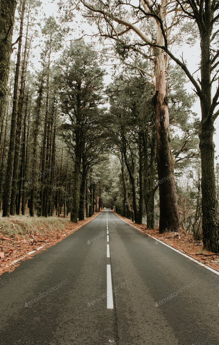 Asphalt road in the meddle of a forest