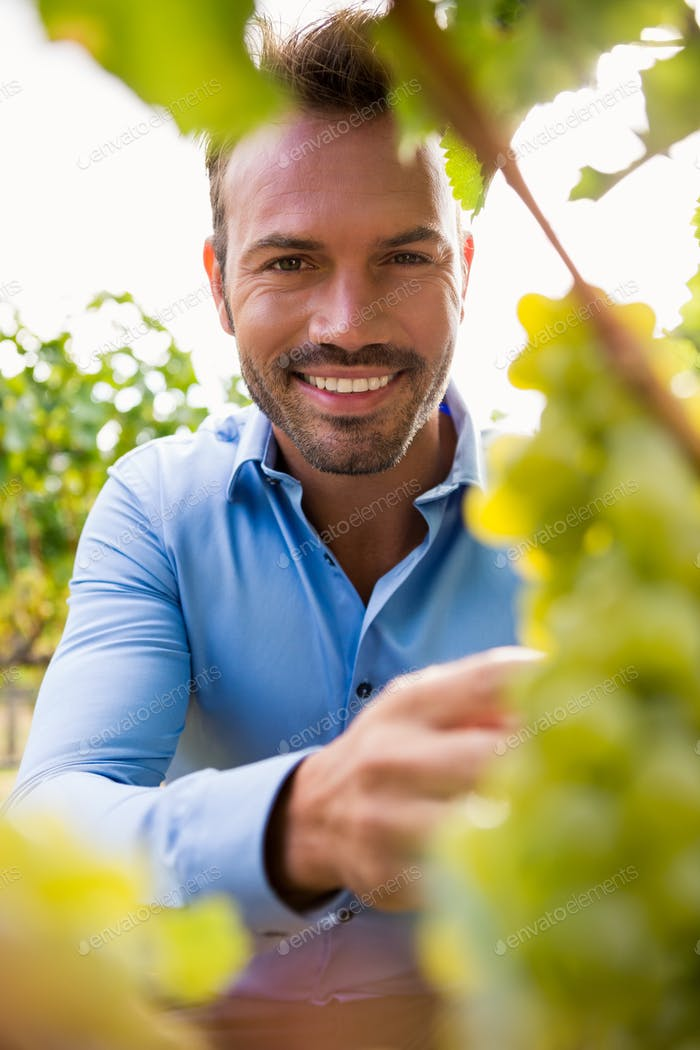 Portrait of man by grapes at vineyard
