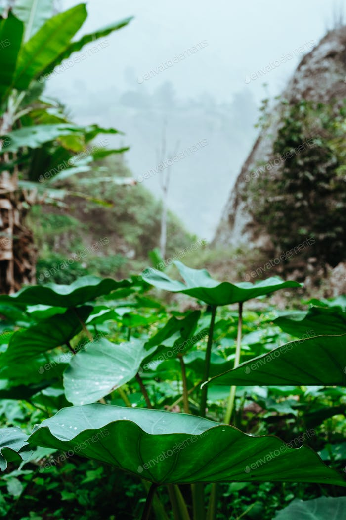 Lotus leaves, plants in a mountain valley
