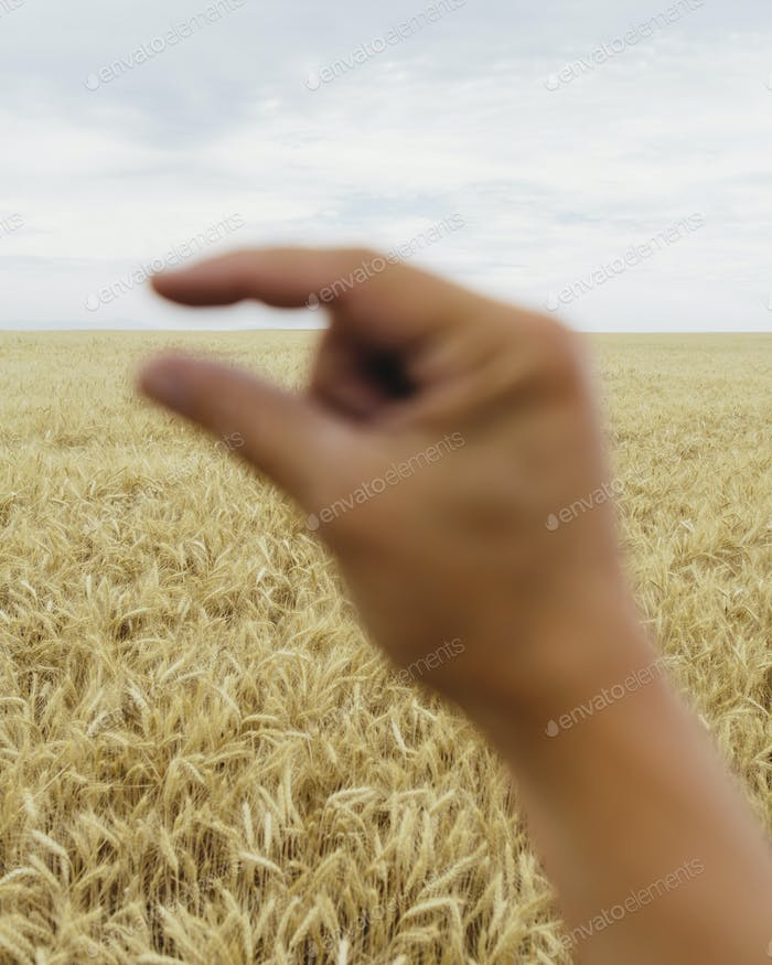 A human hand making a pinch gesture with a field of ripening wheat behind.