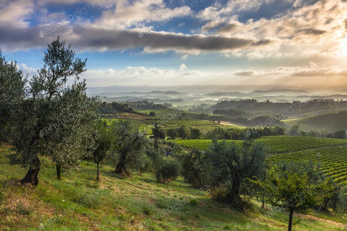 Early Morning Landscape in Tuscany