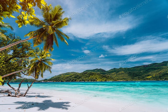 Luxury vacation on tropical island. Paradise beach with white sand and palm trees. Long distance