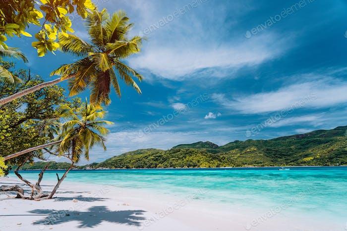 Luxusurlaub auf tropischer Insel. Paradiesstrand mit weißem Sand und Palmen. Langstreckenlänge