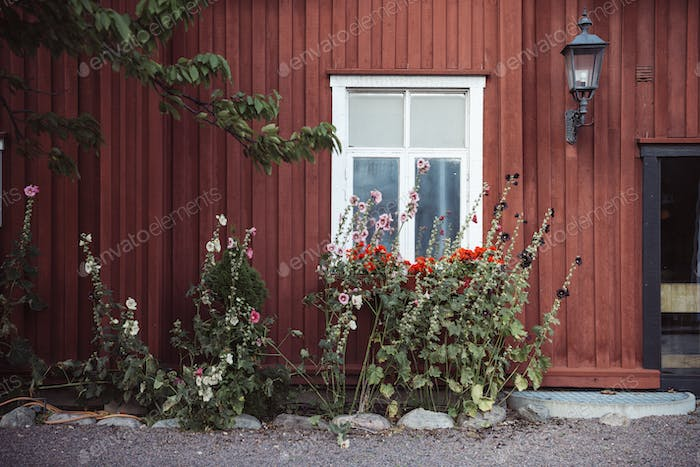 Flowers growing in front of wooden house