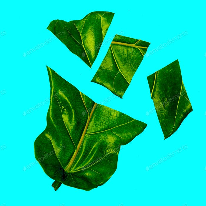 Halfs Leaf Bio Art. Green lover. Flat lay minimal