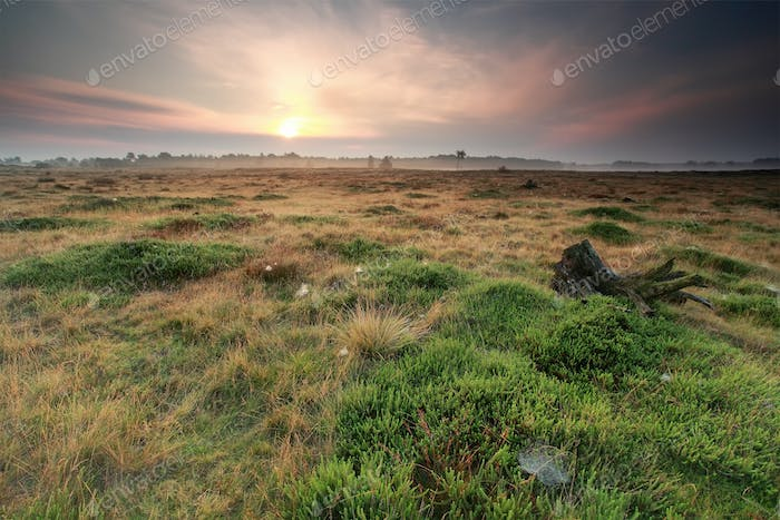 calm sunrise over summer meadow