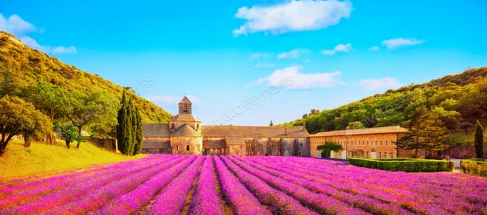 Abbey of Senanque blooming lavender flowers panoramic view. Gord