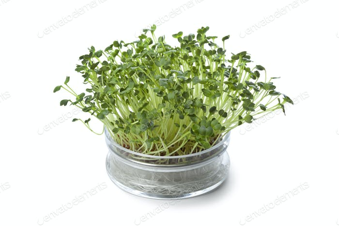 Glass bowl with fresh radish sprouts
