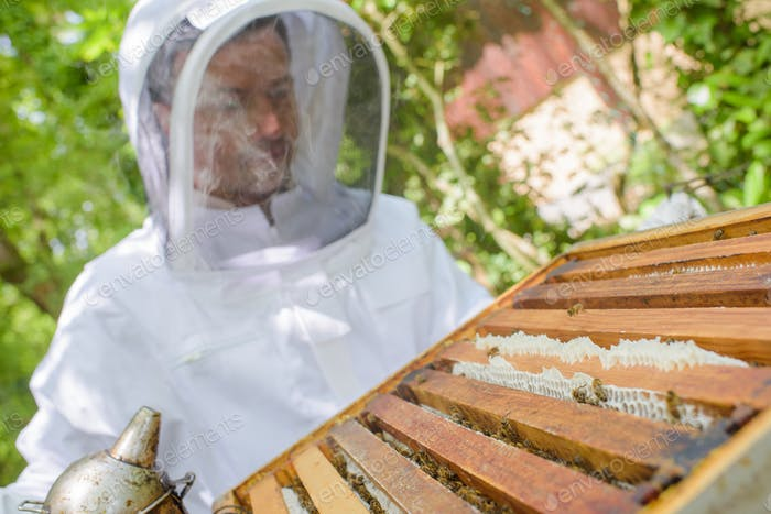 Closeup of beekeeper working on hive