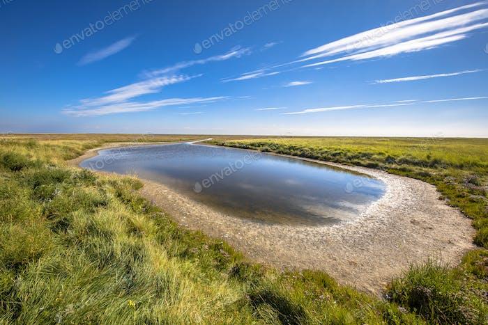 Saltmarsh landscape Rottumeroog