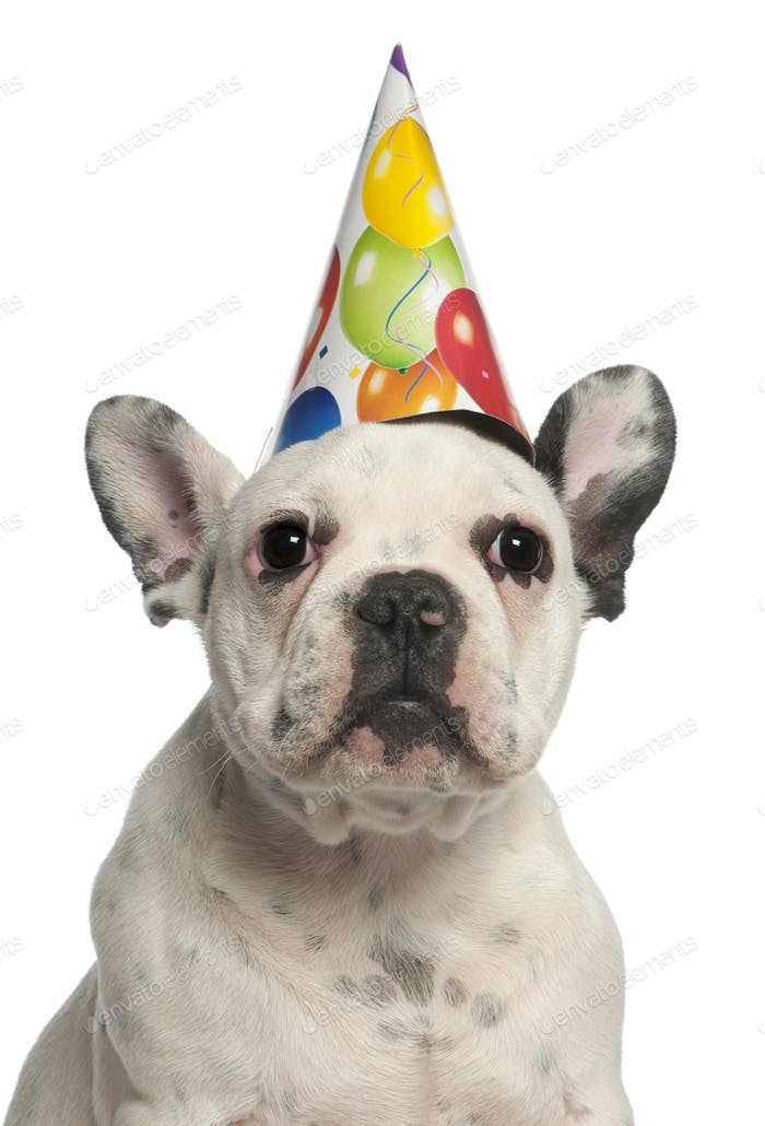 French Bulldog puppy wearing birthday hat, 4 months old, in front of white background
