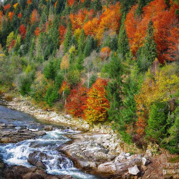 Autumn creek woods with colorfull trees foliage and rocks in for