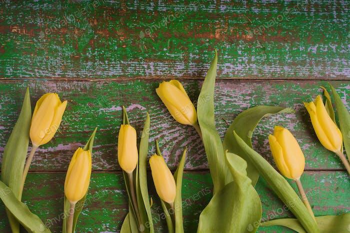 Tulpen auf dem alten grünen Holzhintergrund Draufsicht