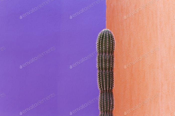 Kaktus gegen kontrastierende Wände