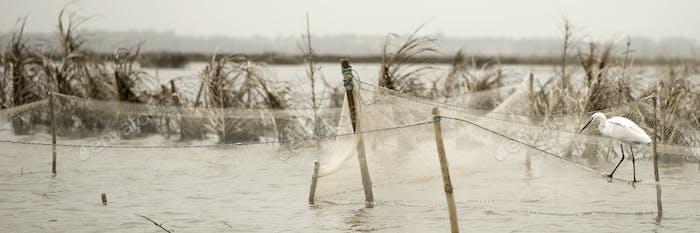 Vogel stehend auf Fischernetzen