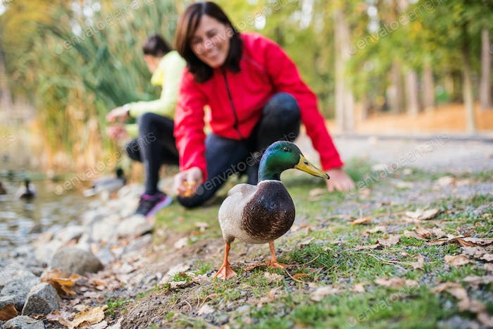 Female runners by the lake outdoors in park in nature, feeding ducks.