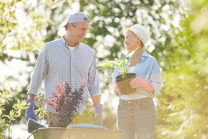 Seniorenbauern im Sonnenlicht
