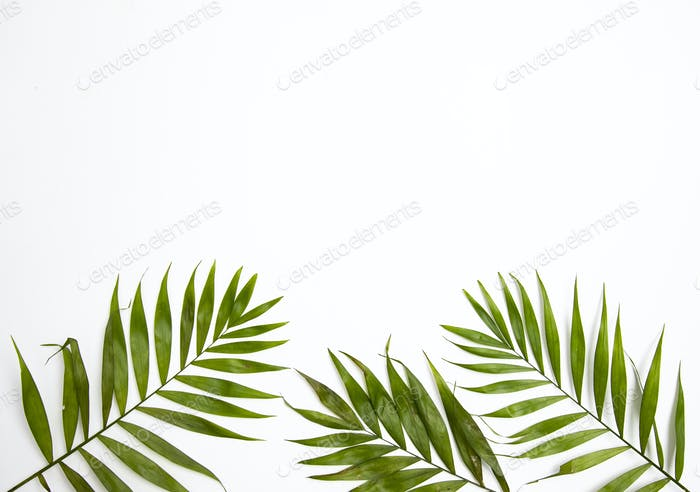 Palm leaves isolated on white.