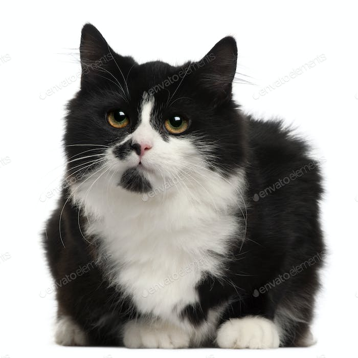 Black and white cat, 5 months old, sitting in front of white background