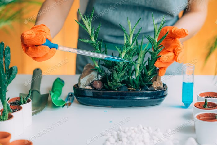 Woman Fertilizing Plants on the Table at Home