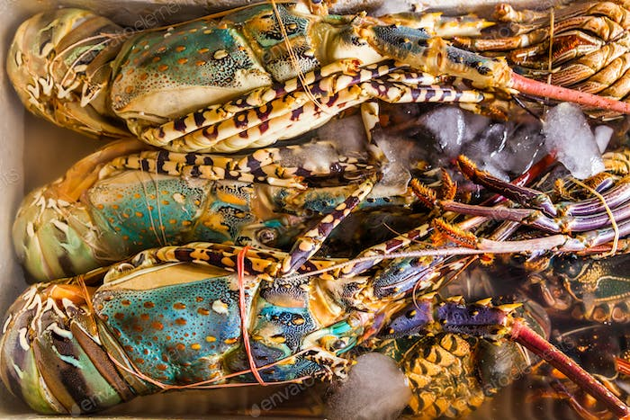 Fresh lobster at the seafood market