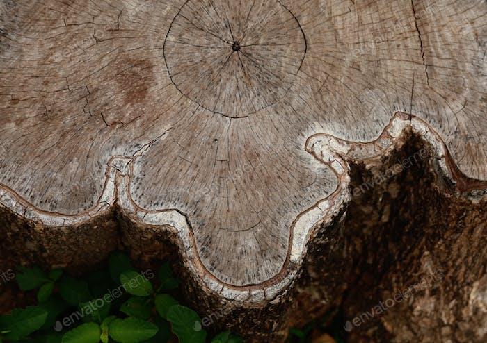 Top view of tree stump