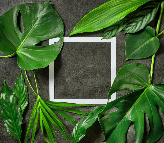 verschiedene tropische Blätter und weißer Papierrahmen